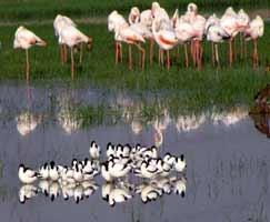 Ranthambore Tourism Honeymoon