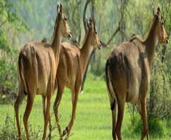Ranthambore Honeymoon Trip