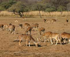 Ranthambore Holiday Package